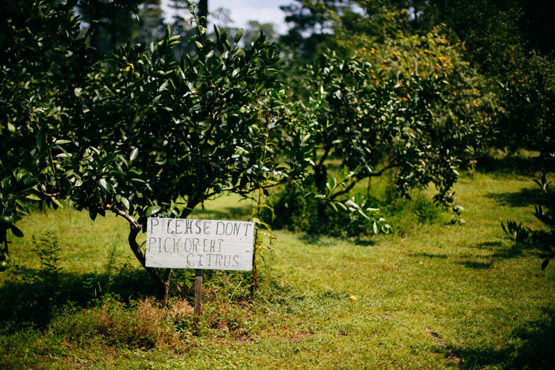 intimate backyard wedding: citrus grove at the glen venue