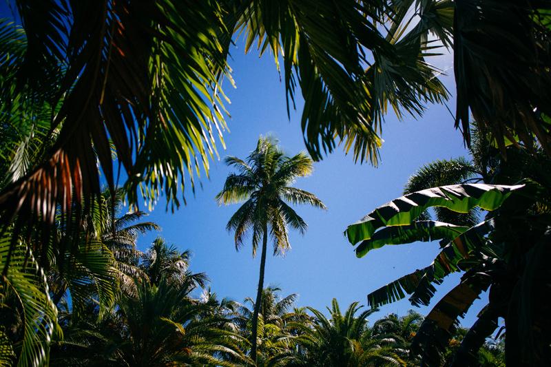 Caribbean Resort Wedding Islamorada, FL. :  florida palms