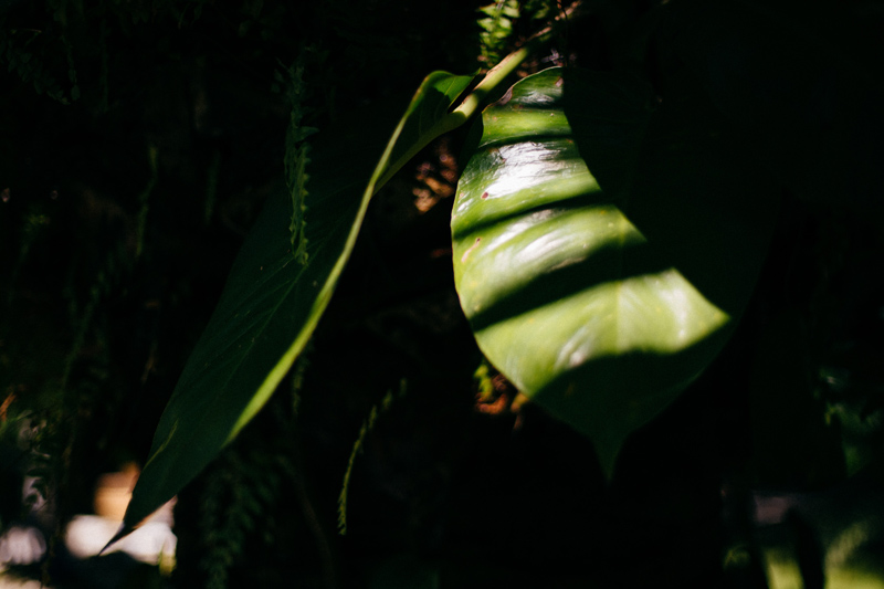 Caribbean Resort Wedding Islamorada, FL. : shadows on palms